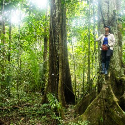 Guardabosque en medio del bosque subido en un árbol