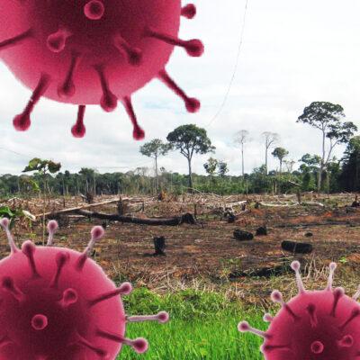 Grupo de árboles talados, protege el bosque con Arbio Perú