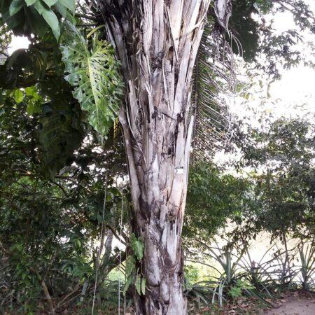 Planta en medio del bosque, protegiendo la flora con Arbio Perú