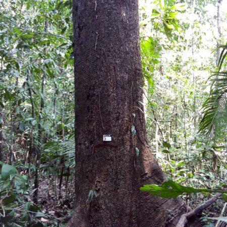 Árbol en medio del bosque, protege el bosque con Arbio Perú