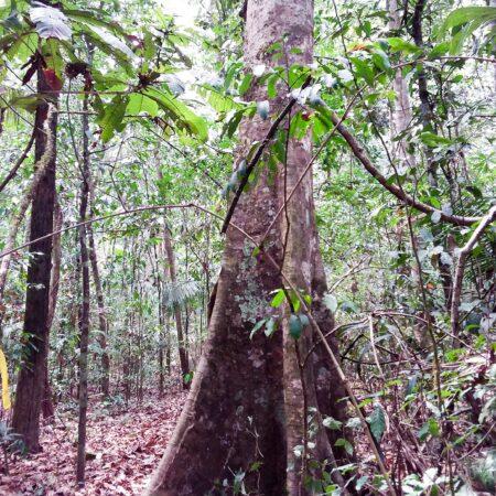 Árbol en medio del bosque, protege la flora con Arbio Perú