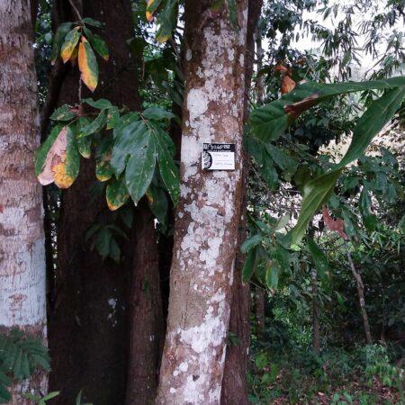 Purma Caspi, protege el bosque con Arbio Perú