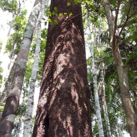 Tronco de árbol a mitad del bosque, protege la flora con Arbio