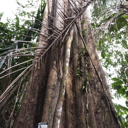 Tronco de árbol a mitad del bosque, protege la flora con Arbio Perú