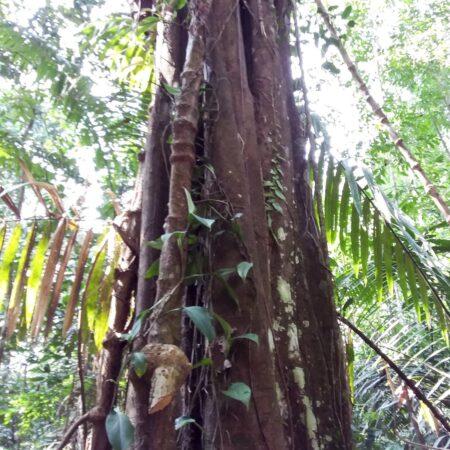 Tronco de árbol en medio del bosque, protege el bosque con Arbio Perú