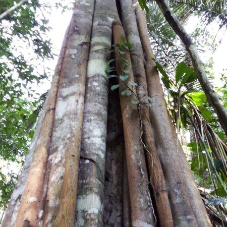 Troncos de árboles en medio del bosque, protege la flora con Arbio Perú