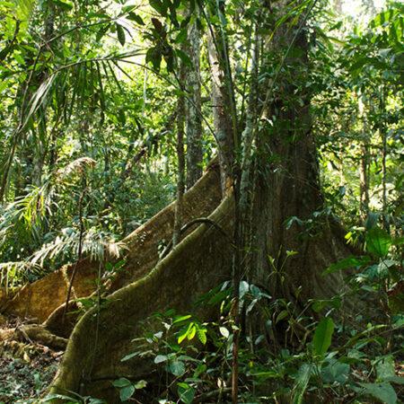 Manchinga, protege un árbol con Arbio